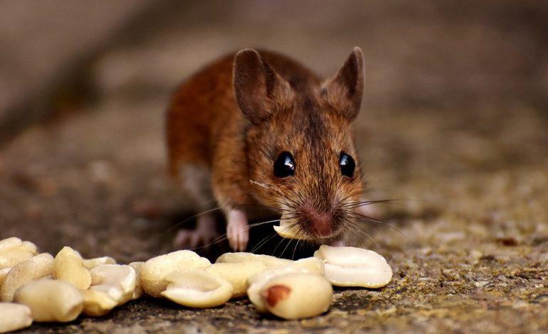 Вопрос юристу: кто должен бороться с мышами и тараканами в доме?