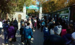 Ни проехать, ни пройти: зоосад «Приамурский» отметил свое пятнадцатилетие