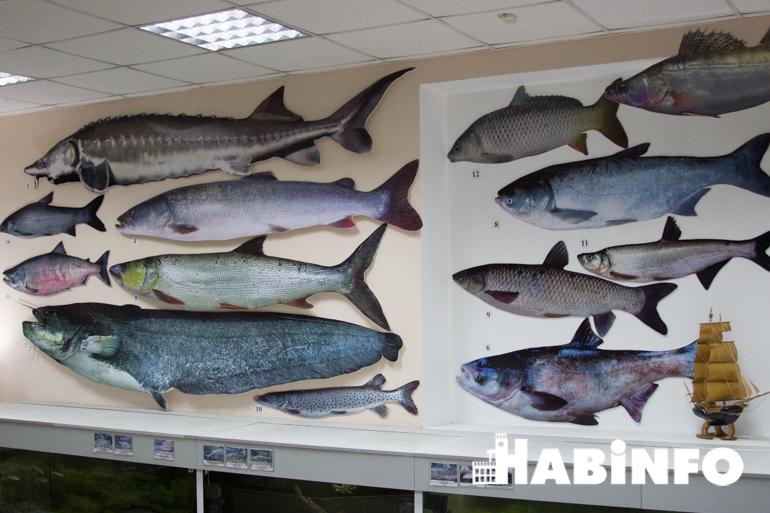 музей аквариум рыбы амура представлять
