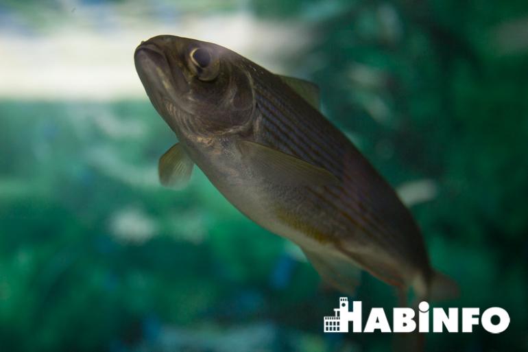 музей аквариум рыбы амура цена