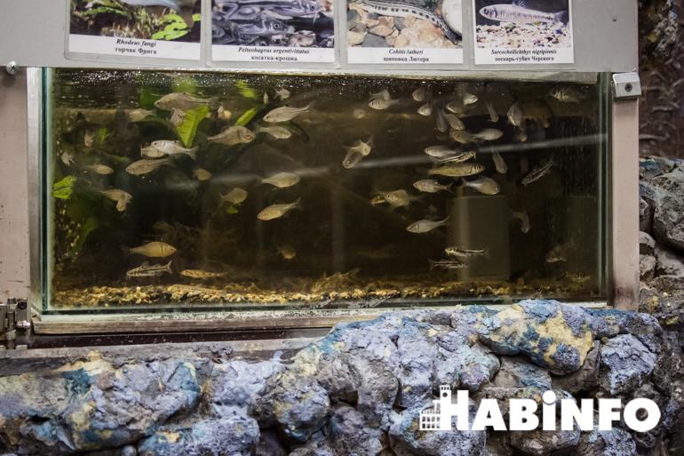 музей рыбы амура фото