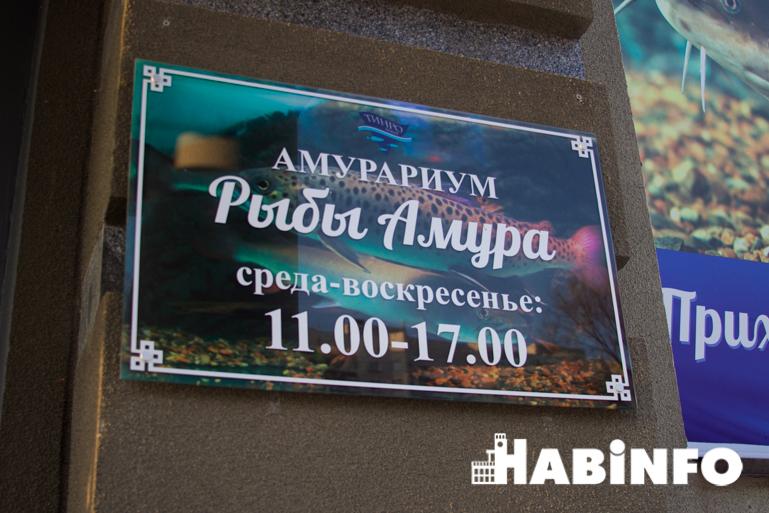 музей аквариум рыбы амура хабаровск
