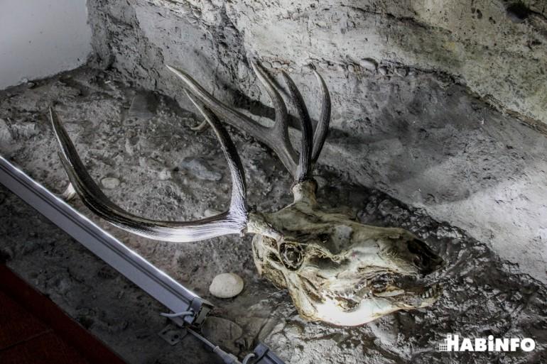 археологический музей официальный сайт фото
