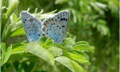 Заповедник с «божественными» бабочками появится под Хабаровском