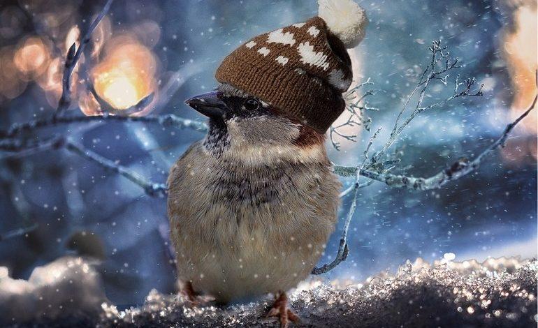 Зима близко: на следующей неделе в Хабаровске похолодает