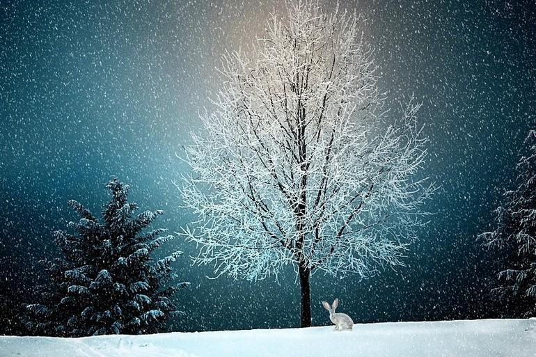 когда выпадет снег в хабаровске в 2017