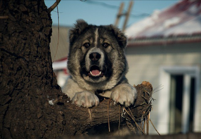 Фотоконкурс собак ХабДог ХабИнфо