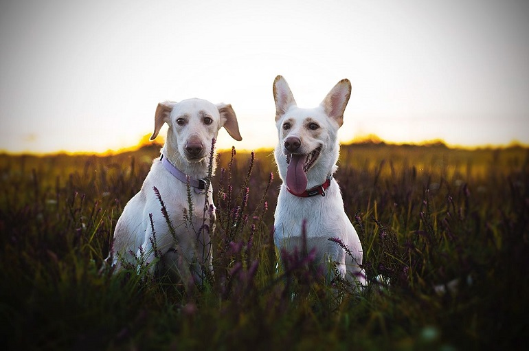 Фотоконкурс собак ХабДог