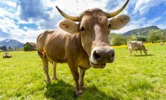 """Как фермеров поддерживают рублем на """"дальневосточном гектаре""""?"""