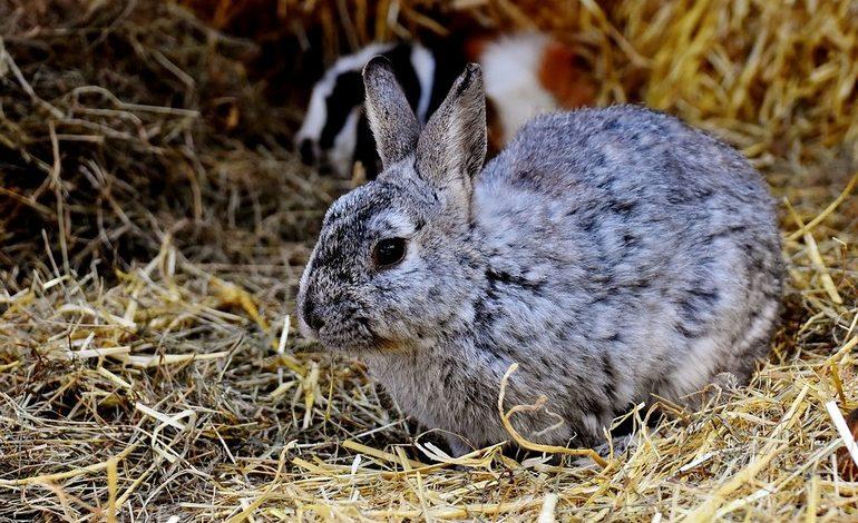 Кролик по цене шиншиллы, или Как в Хабаровске обманывают покупателей меховых изделий
