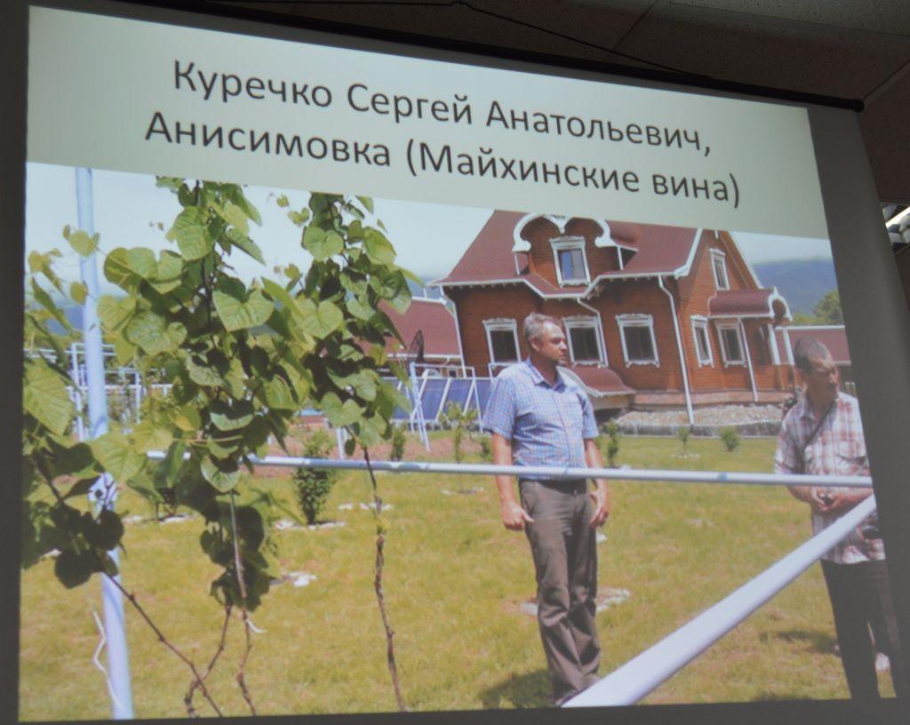 Хабаровский клуб виноградарей Амурская лоза habinfo.ru