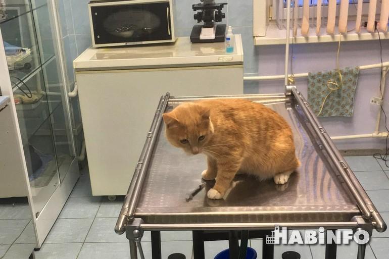всемирный день стерилизации домашних животных