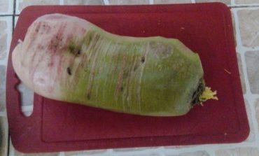 Редька маргеланская – аппетитная красавица из Китая