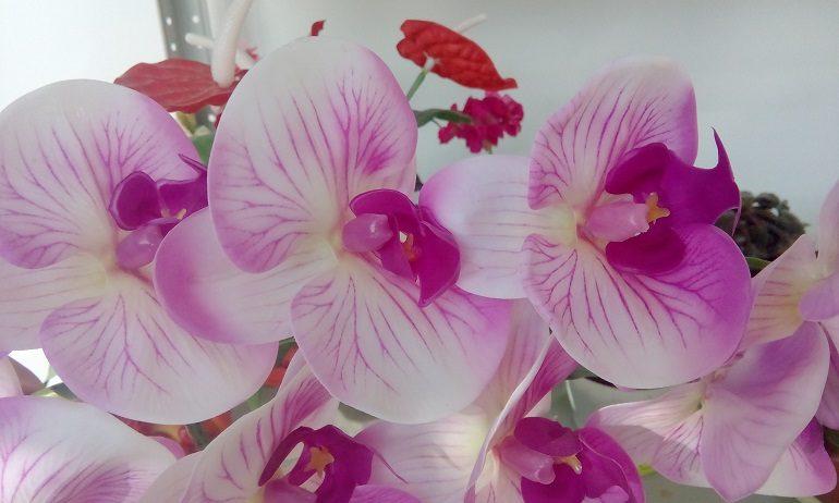 Стресс на пользу орхидеям