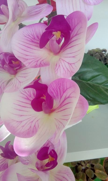 как вырастить орхидею в домашних условиях черенками