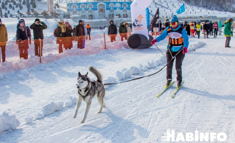 По снегу на собаках: юбилейная «Амурская метель» пройдёт в Хабаровске