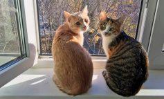 Стоит ли тянуть кота к врачу? Кастрация: за и против