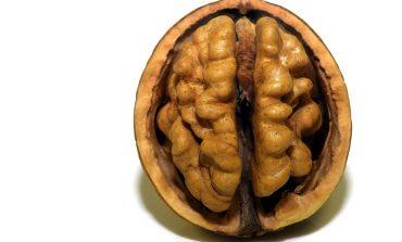Сколько стоит проверить свой мозг?
