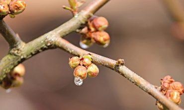 Запахло весной: когда хабаровчанам ждать потепления