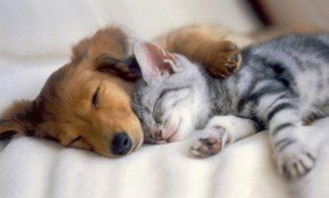 Кошка с собакой - почему их мир не берет