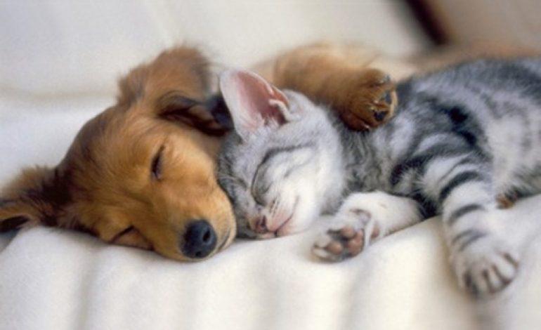 Кошка с собакой – почему их мир не берет