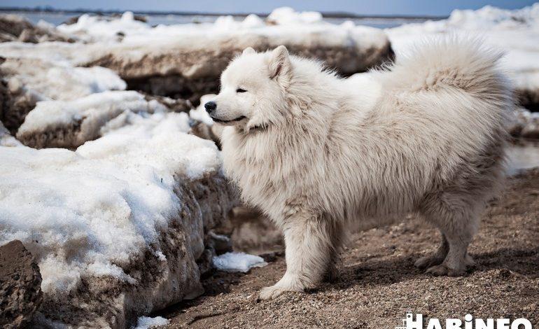 Ледоход как повод для селфи: берег Амура стал самой популярной локацией для фотосессий