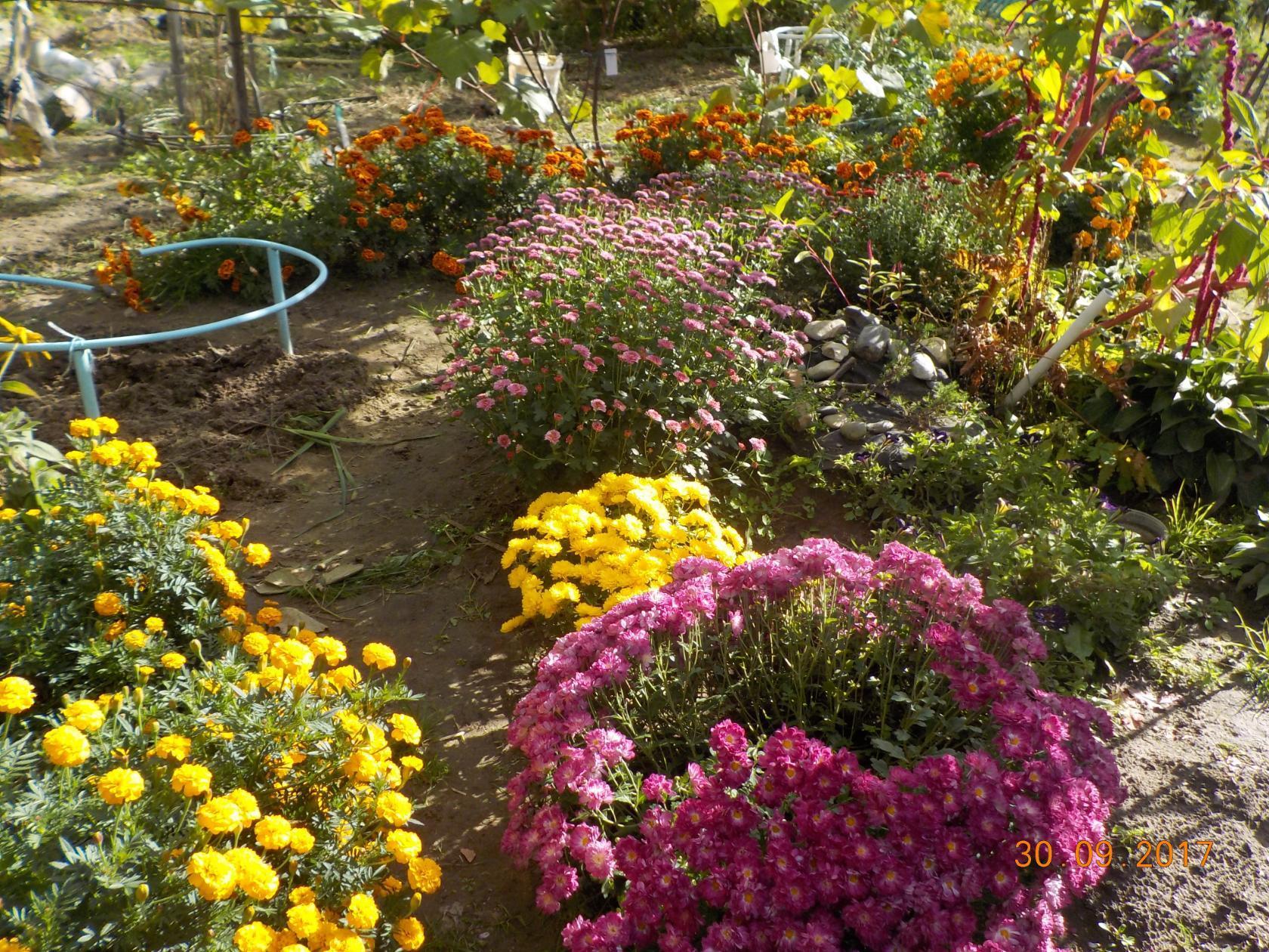 полисадник дача хобби цветы