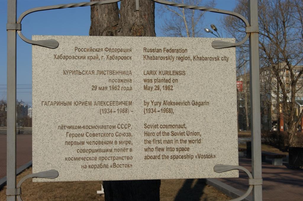 Юрий Гагарин памятное дерево Хабаровске