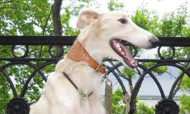 Если собаку укусил клещ: что делать и куда обращаться за помощью?