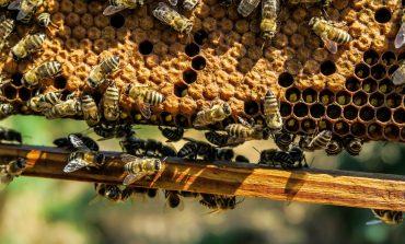 Пчелы вне закона: выйдут ли хабаровские пасечники из тени?
