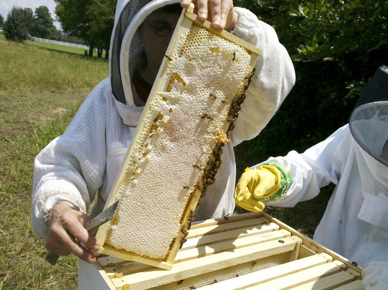 бизнес пчелах хабаровск пчеловодство содержание