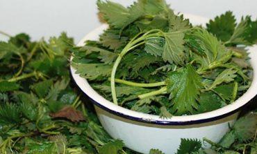 Щи из крапивы - лучший и старинный способ борьбы с весенним авитаминозом