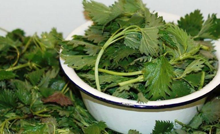 Щи из крапивы — лучший и старинный способ борьбы с весенним авитаминозом