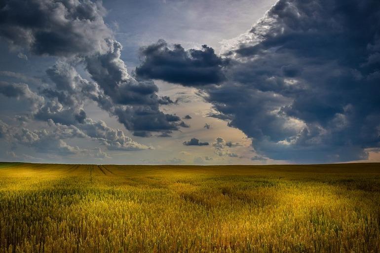 бляхер леонид ефимович гектар