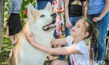 «Джакузи с мопсами» и многочисленные селфи: акция «Собака-обнимака» в Хабаровске