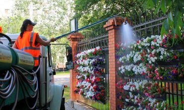 Кто ворует цветы с клумб Хабаровска?
