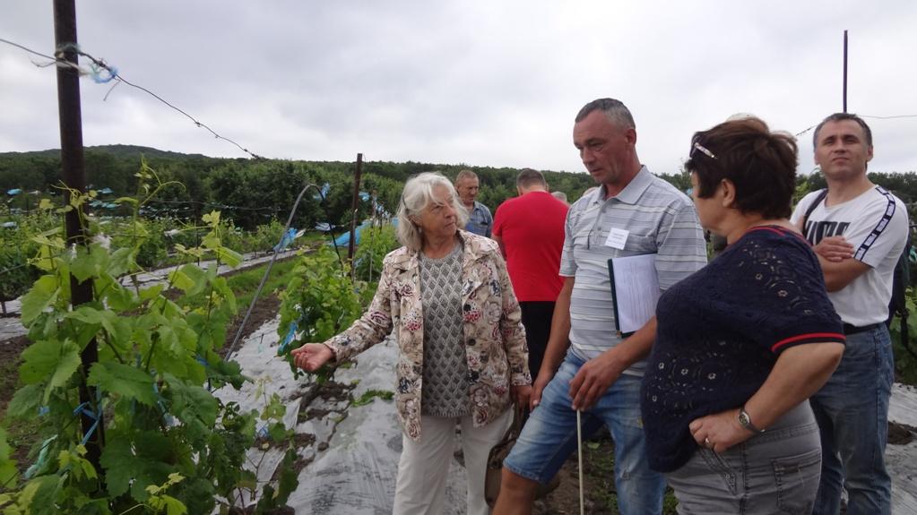 виноградари дальнего востока встреча 2018 питомник