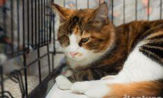 Спасти котика: хабаровские волонтеры нашли хозяев для бездомных животных