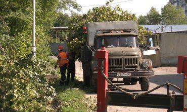 Избавляемся от тополей: как озеленяют улицы Хабаровска