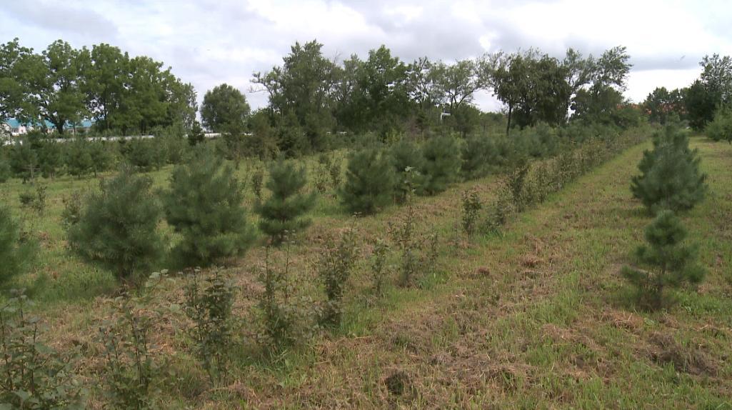 Озеленение Хабаровска 2