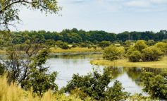 Вредит ли освоение гектара природе?