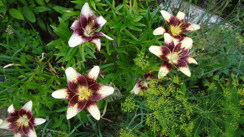 сад цветок 2