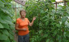У хабаровчанки Ольги Кирьяновой цветы занимают пологорода