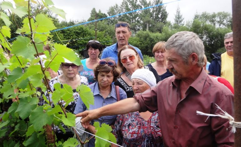 Работы на винограднике и яблоки от Сергея Чудопалова
