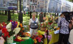 В Хабаровске прошла юбилейная выставка «Городские цветы»