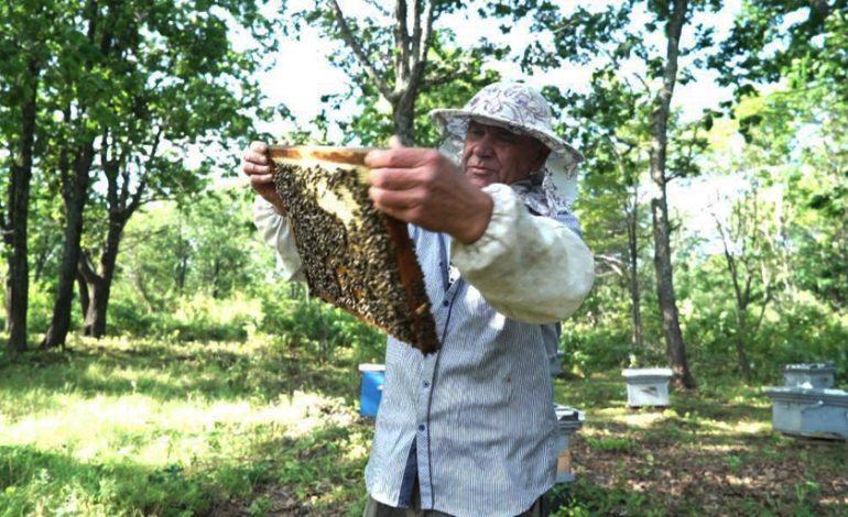 «Бывает, получаю в день по 50 укусов»: хабаровский пчеловод о тонкостях медосбора