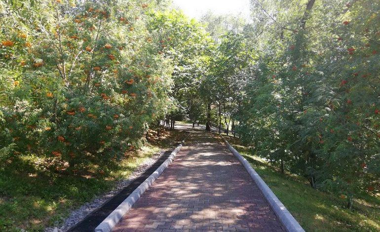 Как будут озеленять Хабаровск в ближайшие годы
