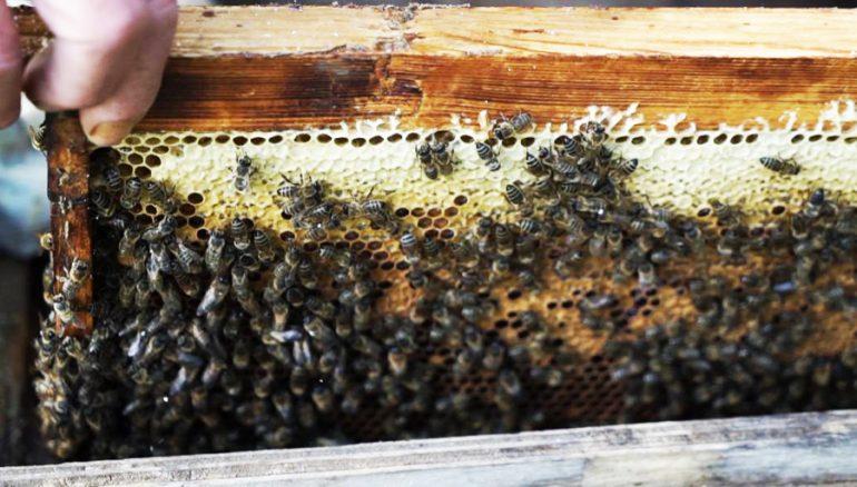 """""""Бывает, получаю в день по 50 укусов"""": хабаровский пчеловод о тонкостях медосбора"""