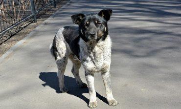 Бродячие собаки угрожают бешенством Хабаровску