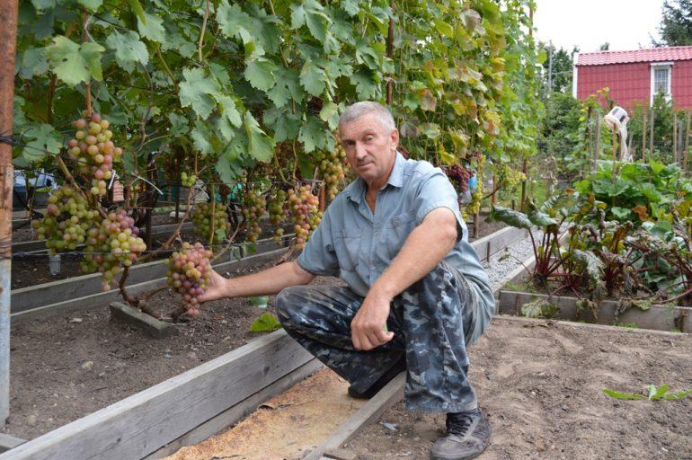 секреты выращивания винограда 4